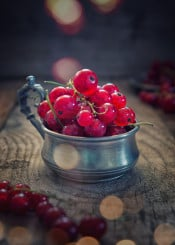 currants red fruit sweet food