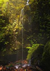 waterfall ferns moss fairytale stream landscape oregon