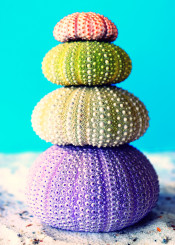 beach coral colors photo