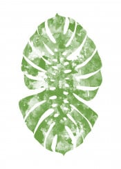 monstera monsteradeliciosa tropical nature plant ink watercolor