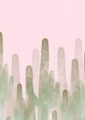 cactus pink summer nature