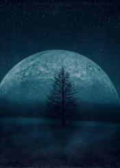 magical moon darkblue tree night stars space mood landscape birds dreamy twilight