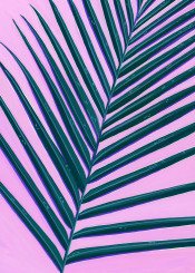 leaf palm greenery botanical plant painted abstract exotic
