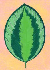 tropical leaf botanical greenery nature