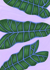 tropical leaf leaves plant botanical exotic greenery