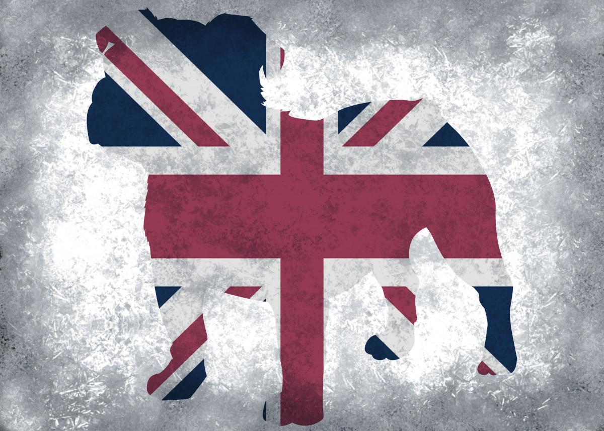 British Flag, British Bulldog 315613