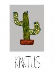 green plant cactus illustration flower