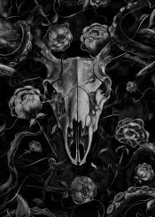 skull deer blackandwhite flora octopus drawing painting