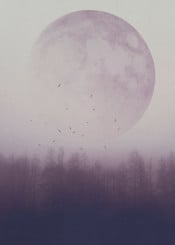 moon violet forest outdoors explore dreamy misty birds woodlands space surreal illustration circle