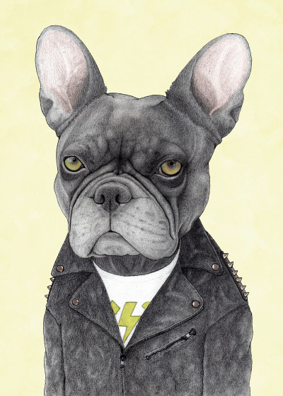Barruf ... Dog illustrations   Displate Prints on Steel