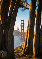 sanfrancisco california goldengate sunset trees landscape