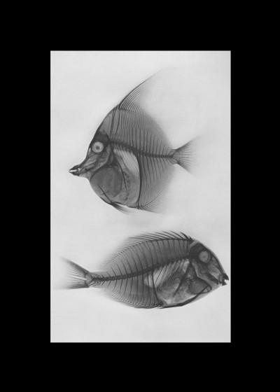 Fine Art   Animalis Tenebris   Displate Prints on Steel