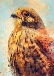 kestrel bird birds jbjart animal animals falco watercolor digital decor decoration illustration
