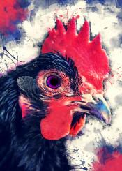 rooster jbjart bird birds animal animals chicken watercolor decor decoration illustration