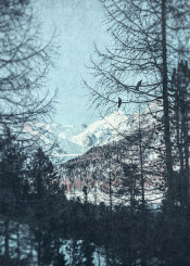 blue trees snow mountains birds painterly black alps outdoors textures