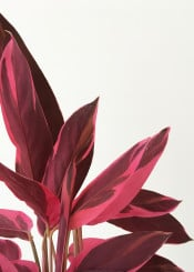 leaves plants nature botanical modern pink red minimalism colour