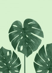 nature botanical monstera green greenery color colorfull