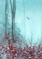 red blue forest winter snow surreal leaves outdoors trees birds photoillustration textures fog mood