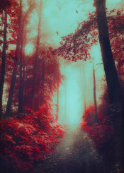 red surreal forest hike birds landscape photography dreamscape dreamy mood fog glow woods mystical solitude calm