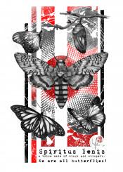 spiritus lenis butterflies