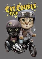 cat catlover kitten riders