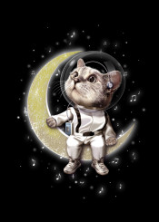 cat space astronaut moon kitten kitty