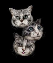 cat rockstar rockers music funny