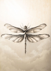 nature animals insects dragonfly dragonflies illustration