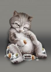 cat kitten milk funny cute