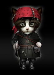 cat kitten pirate cute