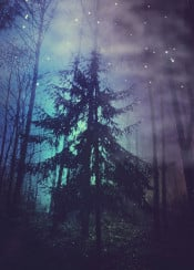 tree surreal night blue violet stars mood woods forest haze fog eerie dreamy textures painterly photography