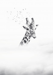giraffe sky above clouds surreal fantasy blackandwhite birds limitless dreamy