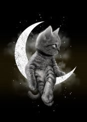 cat moon kitten