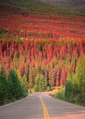 forest fall autumn red orange warm road highway path seasons epic scenic landscape jasper alberta canada moment view trees