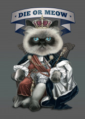 cat cute king funny humor