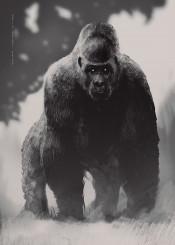gorilla black wildlife retina animal animals