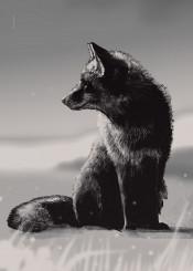 fox black wildlife retina animal animals
