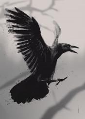 crow wildlife black retina animals animal