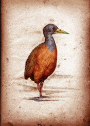 bird ornithology birds vintage scientific