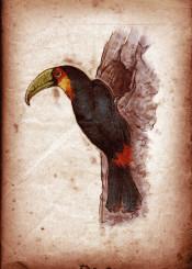 bird birds ornithology toucan vintage scientific