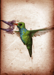 bird birds ornithology hummingbird flowers vintage scientific