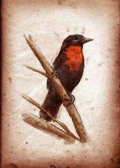 bird birds ornithology fruitcrow vintage scientific