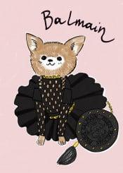 balmain fashion smalldog chihuahua