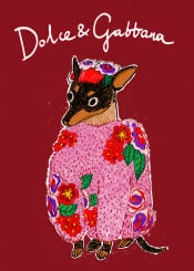 littledog puppy dolcegabbana sweater