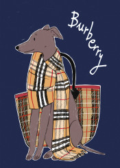 burberry scarf burberryscarf fashion hound greyhound dog