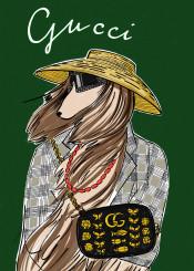 gucci guccibag afghanhoung dog fashion