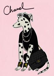 chanel cocochanel fashion paris dalmatian dog dalmatiandog