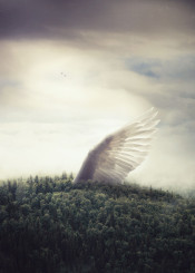 wing landscape trees vast big surreal fantasy birds dreamy calm forest