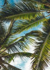 tropical palms clouds sun resort paradise view