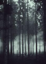monochrome bnw forest mystery mood dreamy glow spooky fog woods dark texture outdoors explore wanderlust